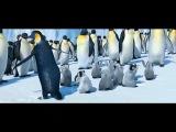 марийские пингвины))